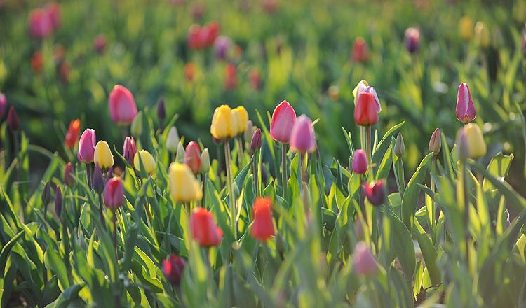 Blumen Frisch Vom Feld Haldenhof Beuren Balzholz Familie Schnerring